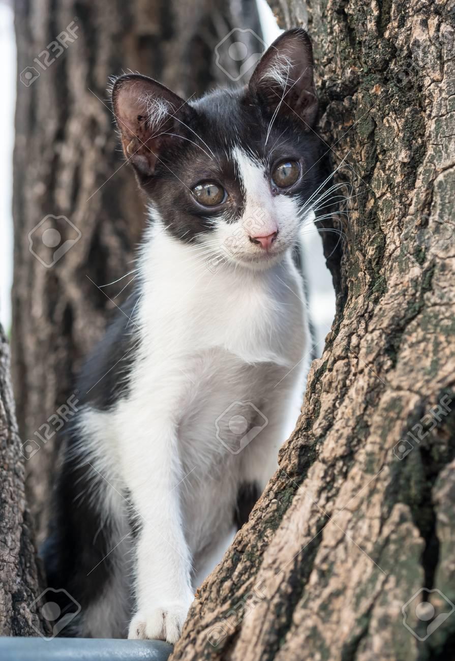 Poco Lindo Subida Gatito Blanco Y Negro En El árbol En El Jardín Al ...