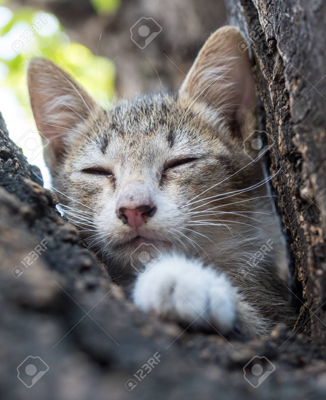Little Cute Gray Kitten Closing Eyes And Sleep Outdoor Tree