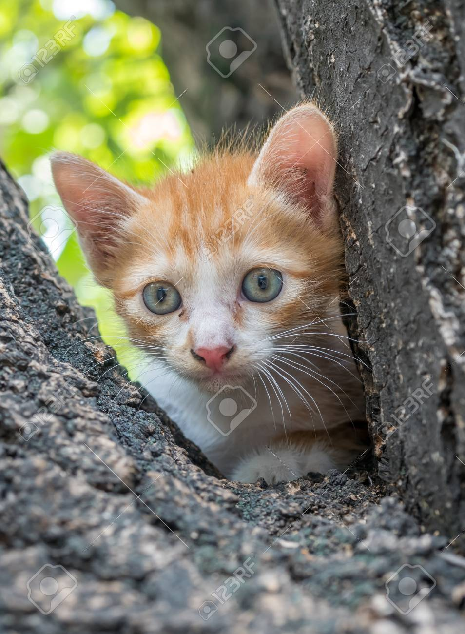 Pequeño Gatito Lindo Color Dorado Subir En El árbol Grande Al Aire ...