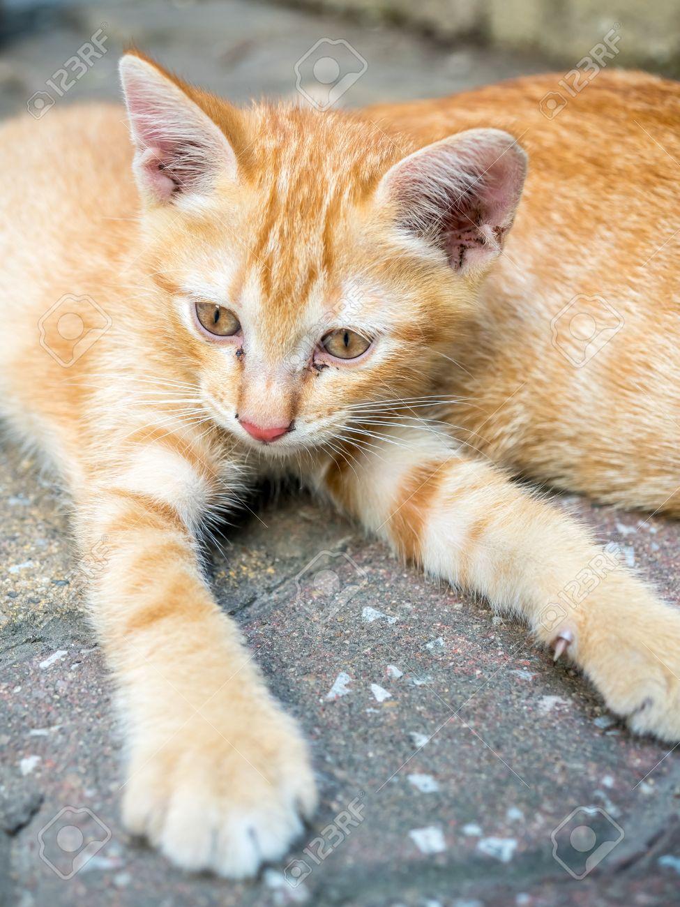 small cute golden brown kitten lay on outdoor concrete backyard