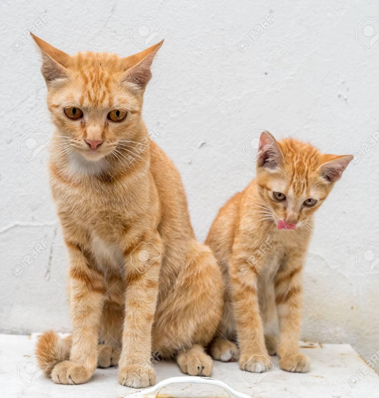 Magnífico Hola Gatito Gato Para Colorear Embellecimiento - Ideas ...