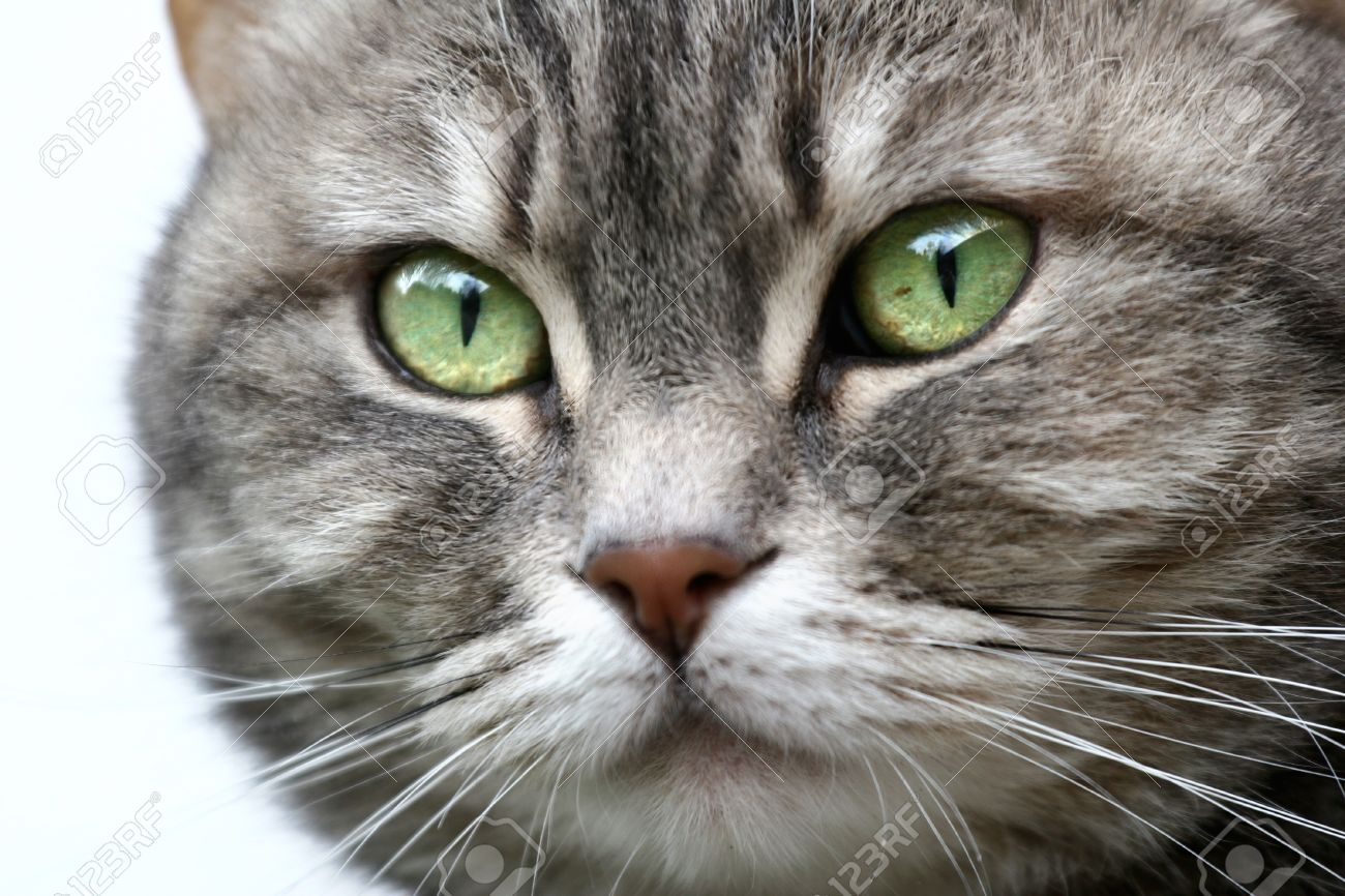 grey cat (s) with green eyes Stock Photo - 9400917