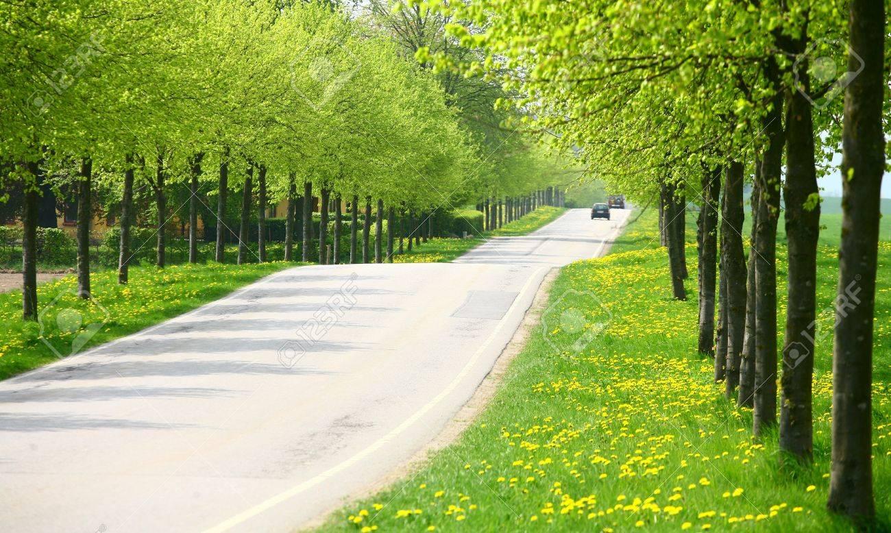 paysage Vert printemps avec des arbres verts dans le côté danois pays Banque d'images - 9742252