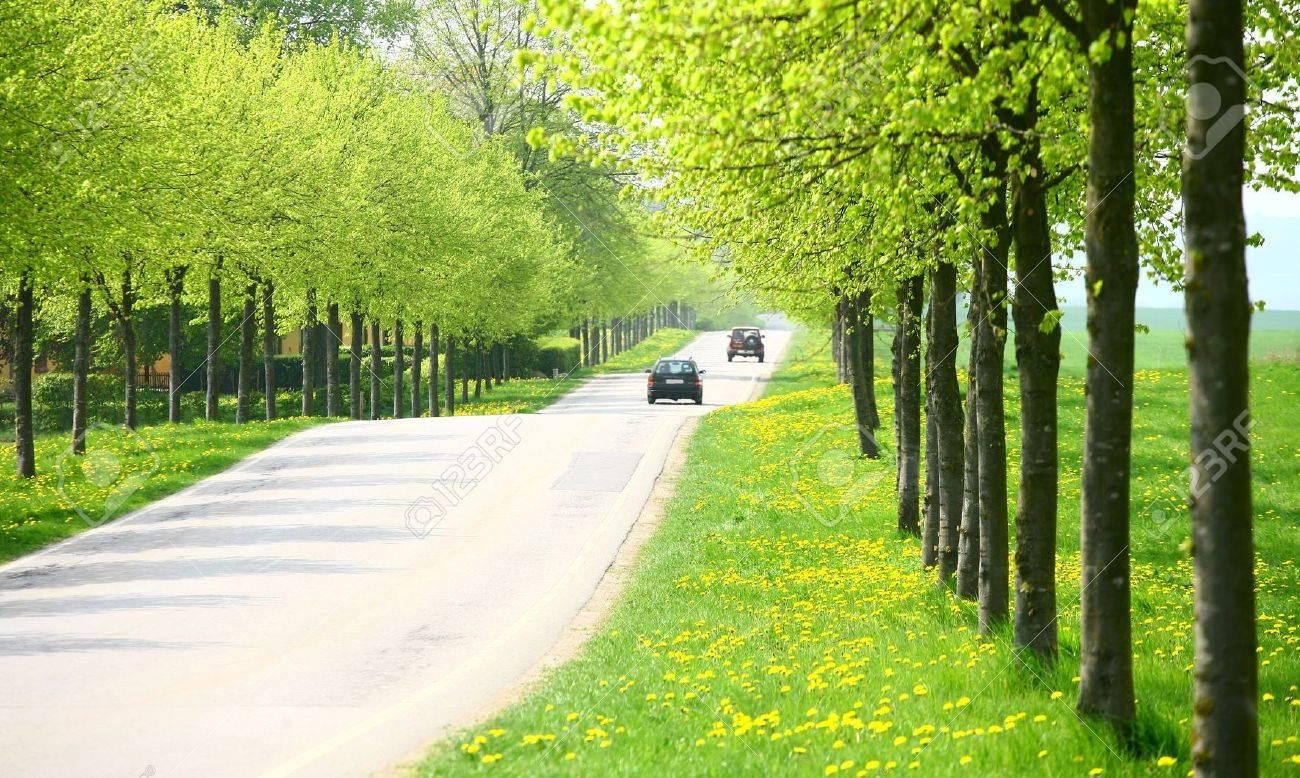 paysage Vert printemps avec des arbres verts dans le côté danois pays de près de vieux de voitures vintage de la collectionpanneaux de signalisation dans une villegros plan de vieux de voitures vintage de la collection Banque d'images - 9740491
