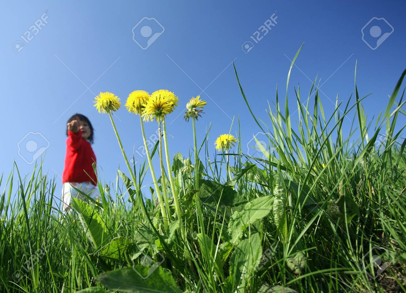 spring  in the countryside  in denmark, a green field with dandelions and child playing in background Stock Photo - 10071061