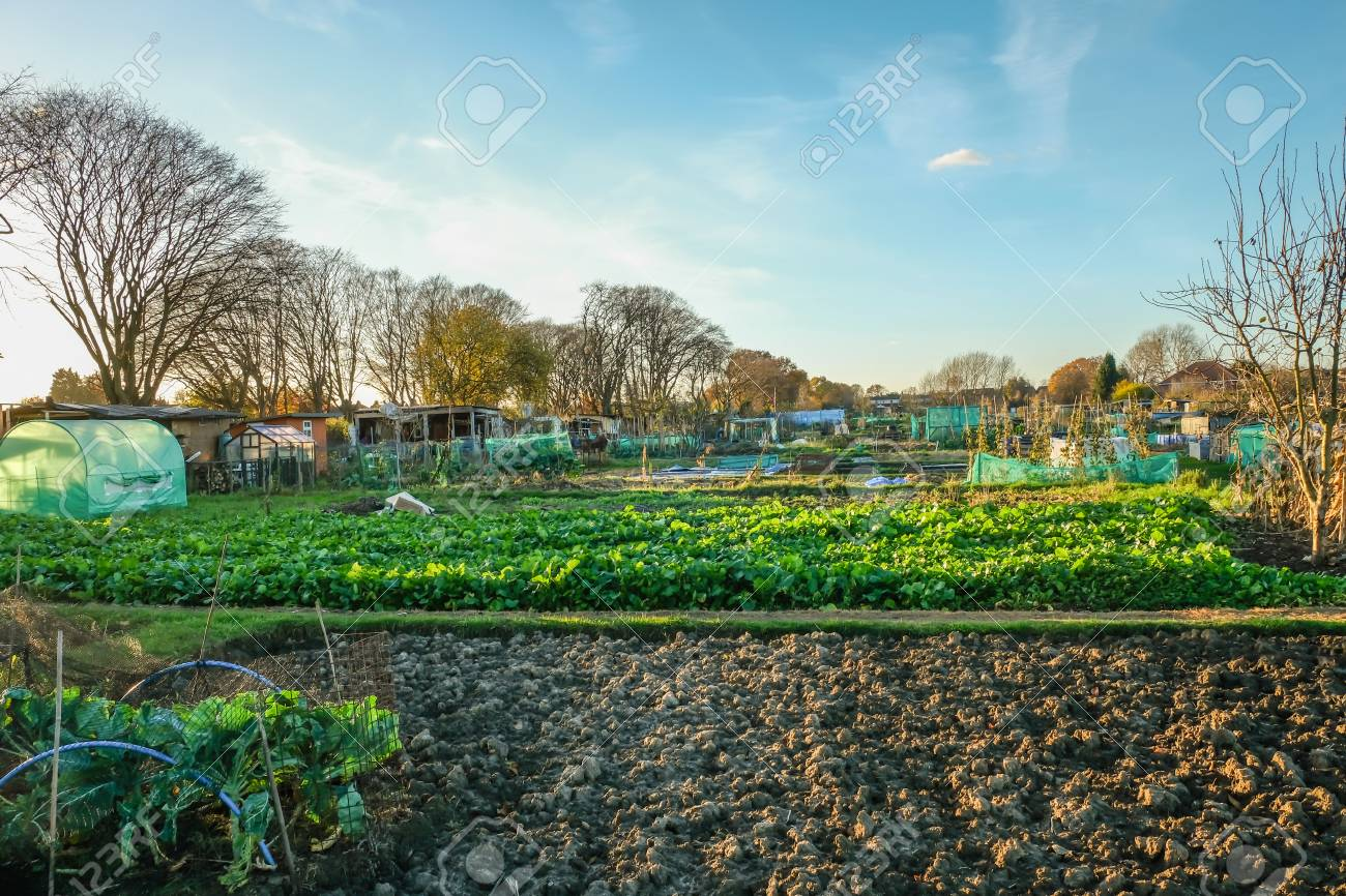 Allotment Is A Small Plot Of Land You Rent And Then Cultivate ...