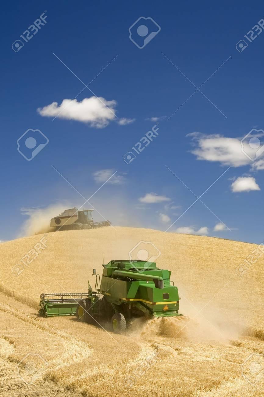 Two Combines Harvesting Wheat Stock Photo - 3392715