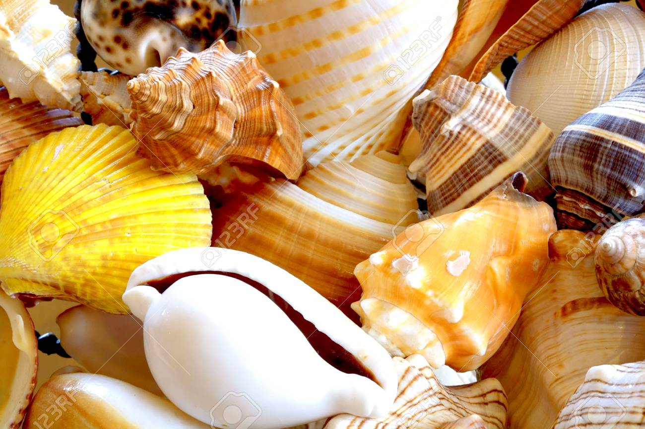 Shell Background Stock Photo - 3826088