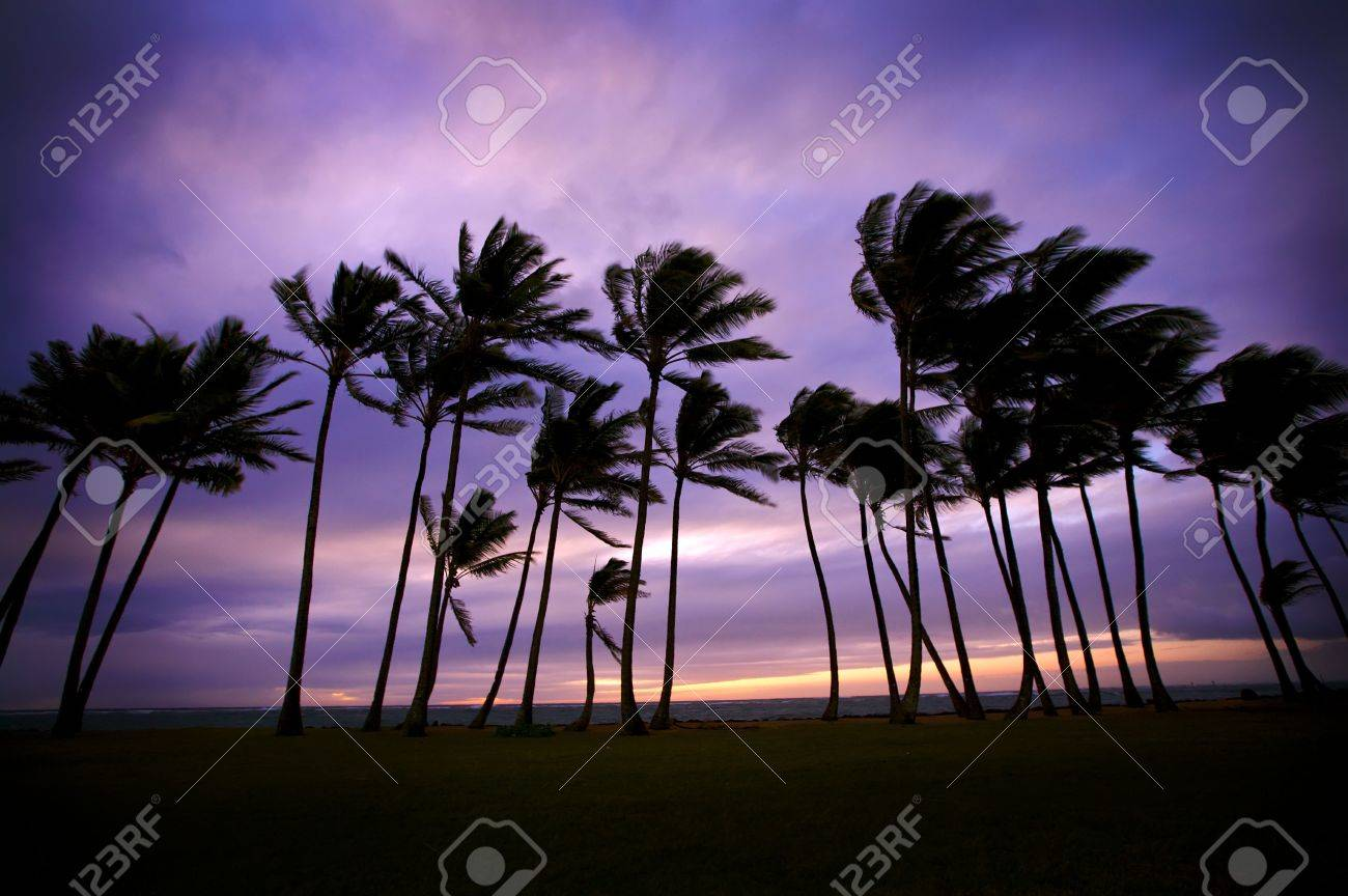 Tropical Sunset Stock Photo - 4220540