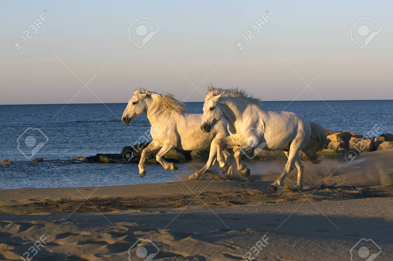 Two Horse running down the beach Stock Photo - 13972558