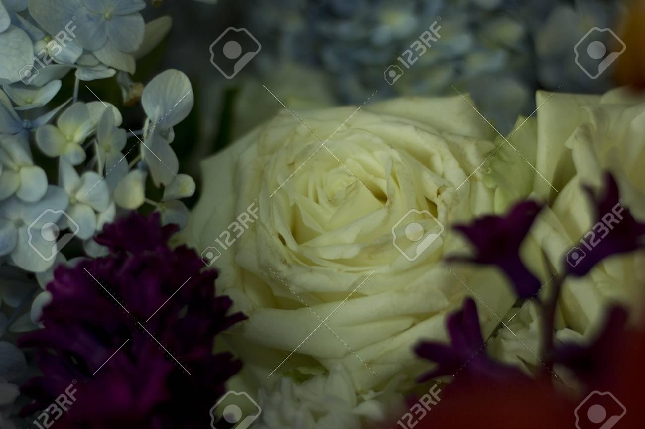 Weisse Rosen Unter Verschiedenen Arten Von Blumen Lizenzfreie Fotos