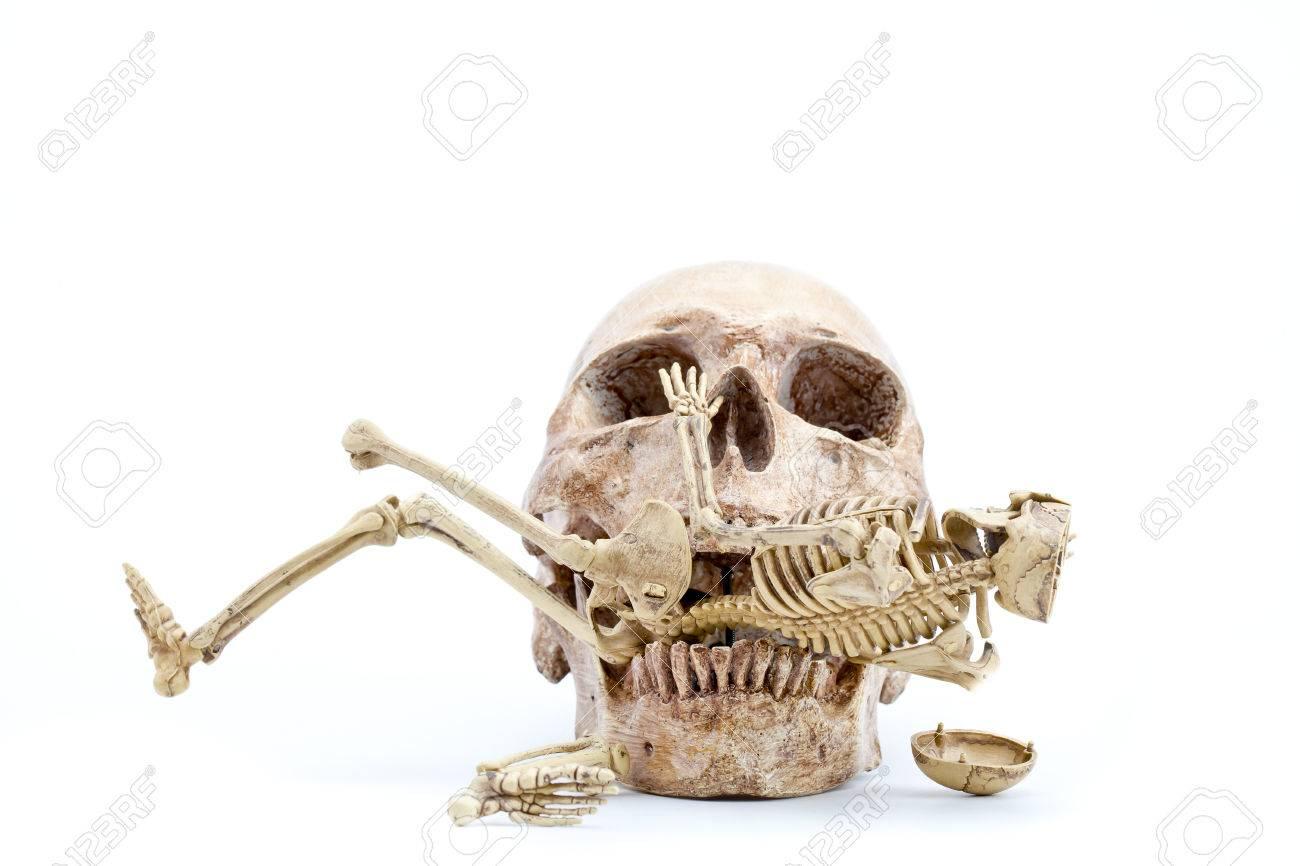 Cráneo Morder Un Esqueleto En El Fondo De Color Blanco Fotos ...