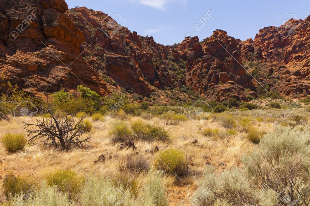 Golden yellow and green desert plants in a Utah Canyon Stock Photo - 21941967