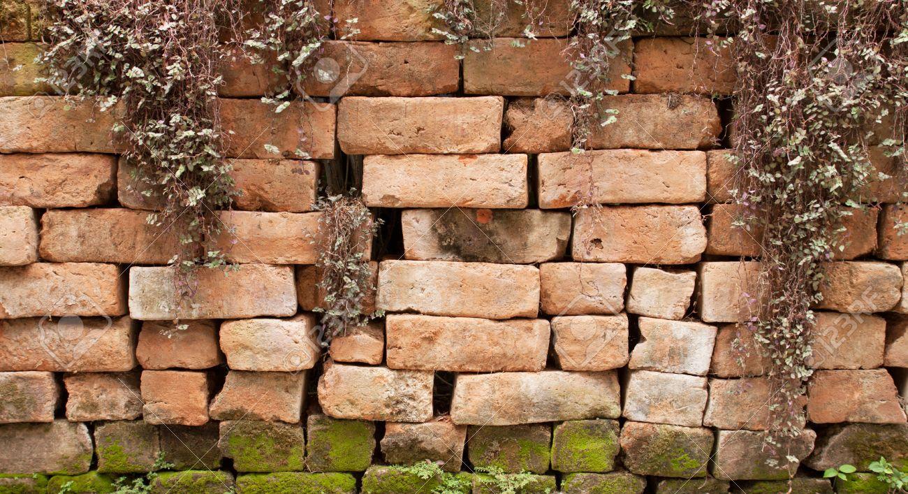 Tegelsten, vägg, bakgrund, träd, kakel, kruka, växt, yta ...
