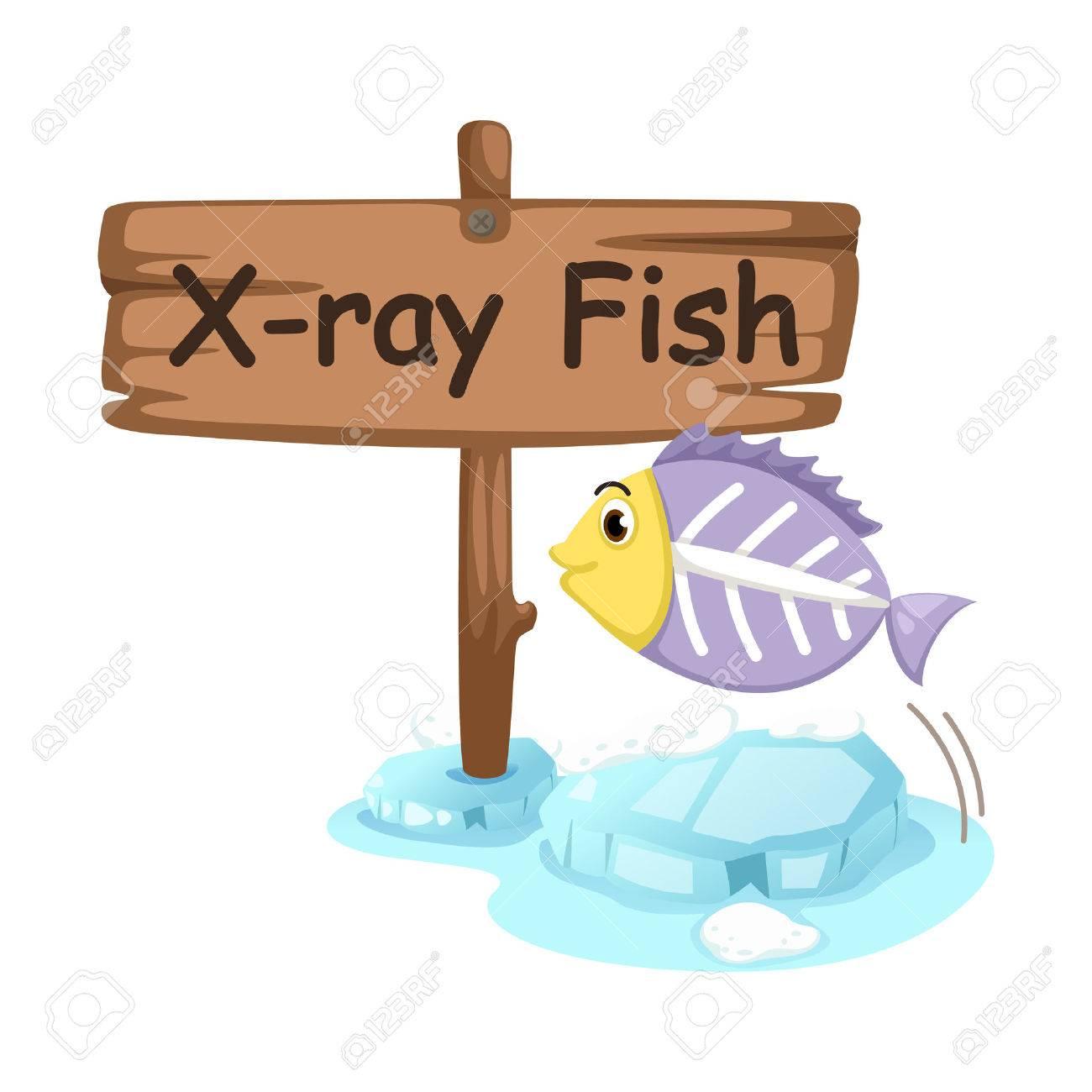 610 x ray cartoon cliparts stock vector and royalty free x ray