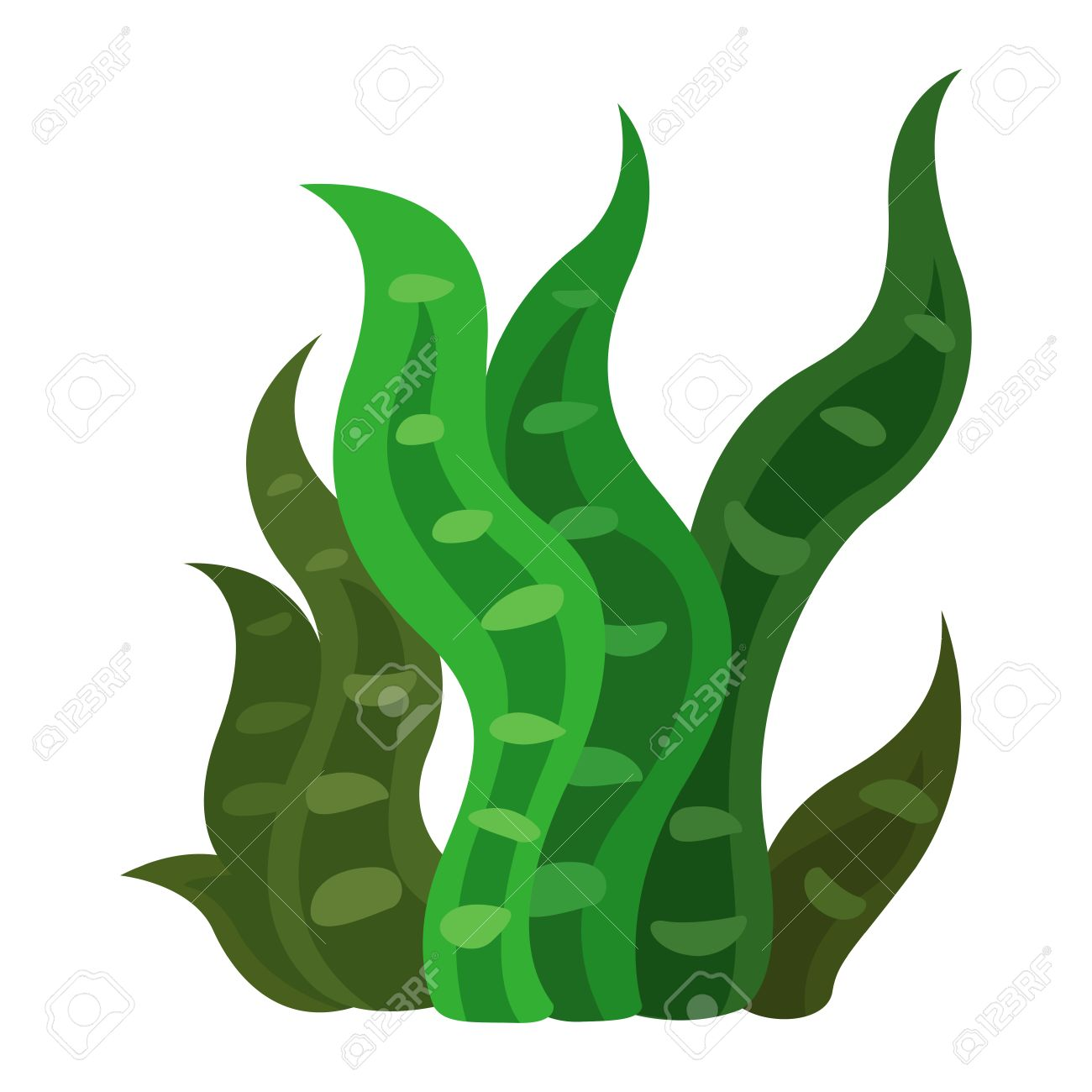illustration of a seaweed vector royalty free cliparts vectors and rh 123rf com cartoon seaweed vector seaweed vector free