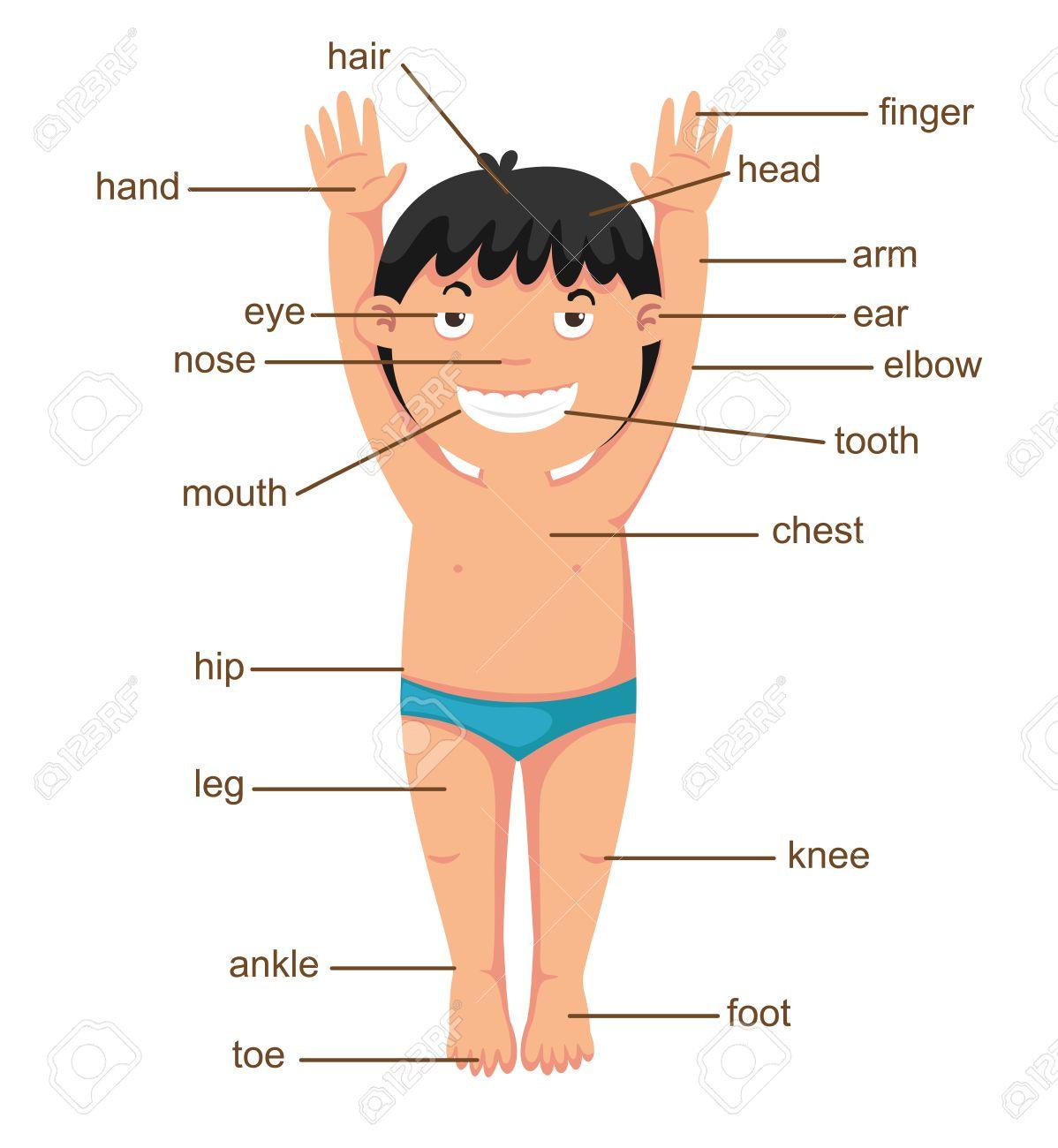 Berühmt Teil Des Körpers Bilder - Anatomie Von Menschlichen ...