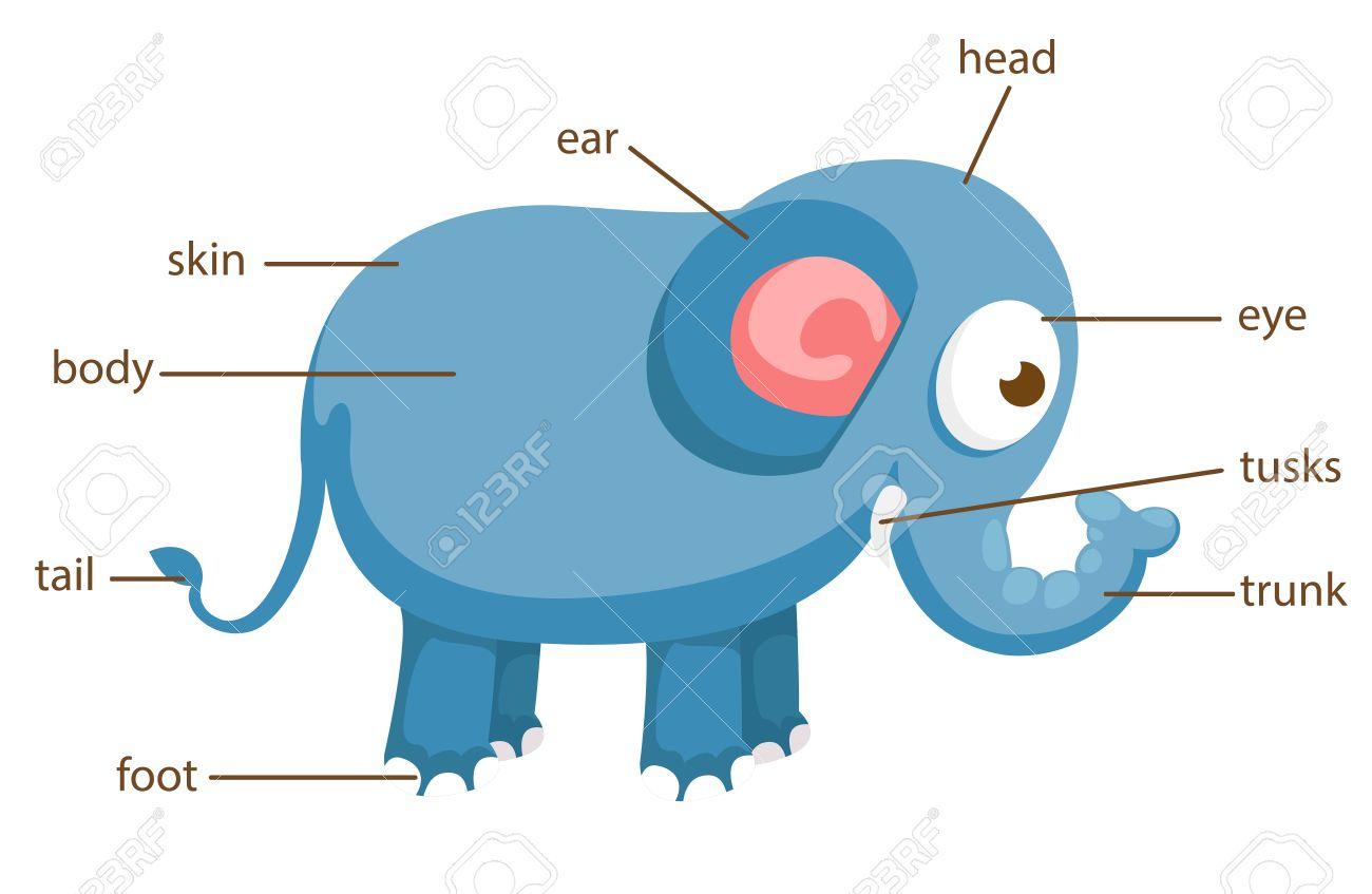 Ilustración De Parte Del Vocabulario Del Elefante De Cuerpo ...