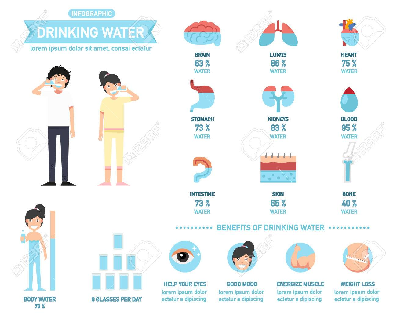 benefits of drinking water infographics body water vector