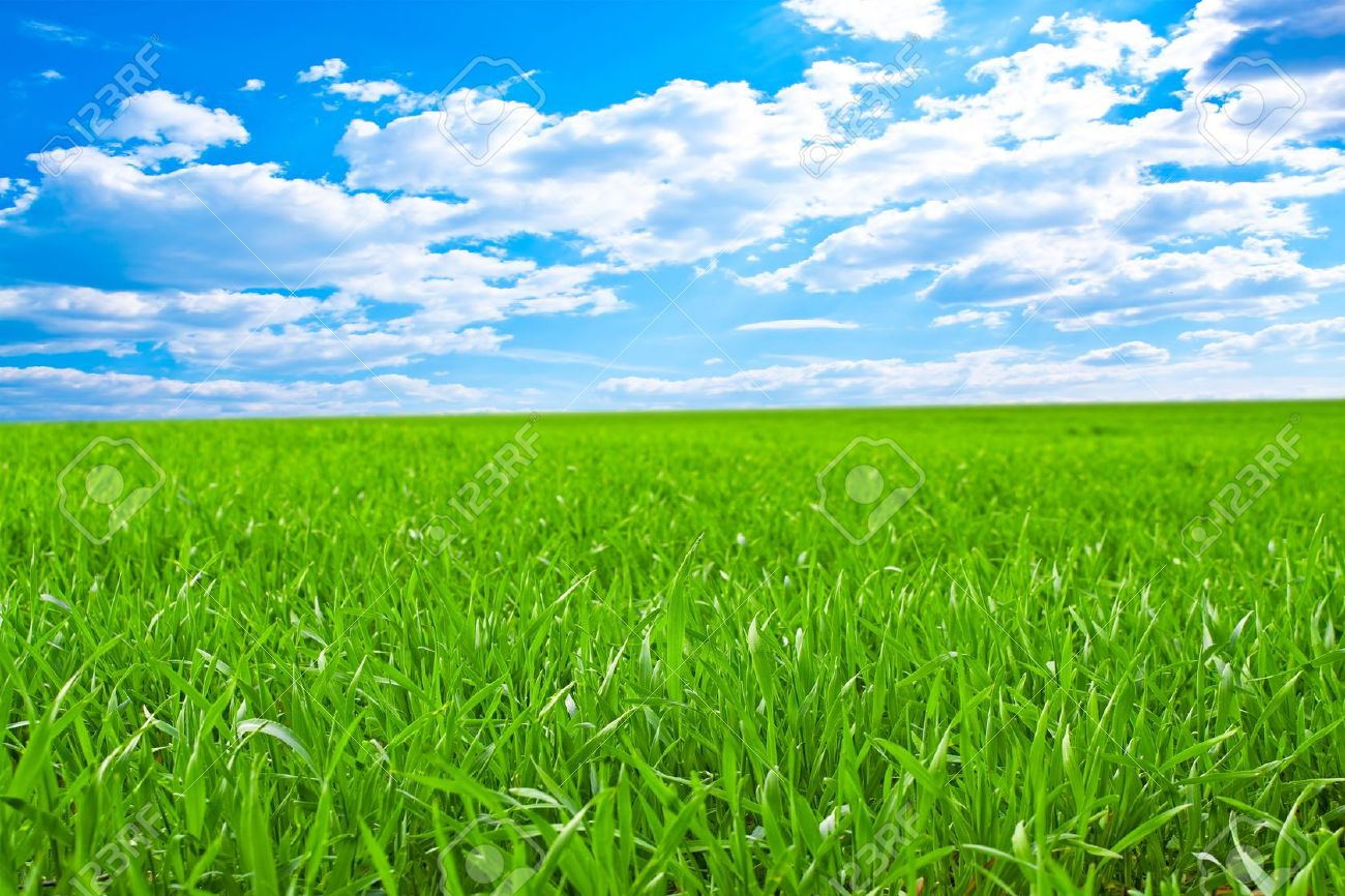 green grass field. Plain Green Beautiful Field With A Green Grass And The Beautiful Sky On Horizon  Fluffy Clouds Stock In Green Grass Field E