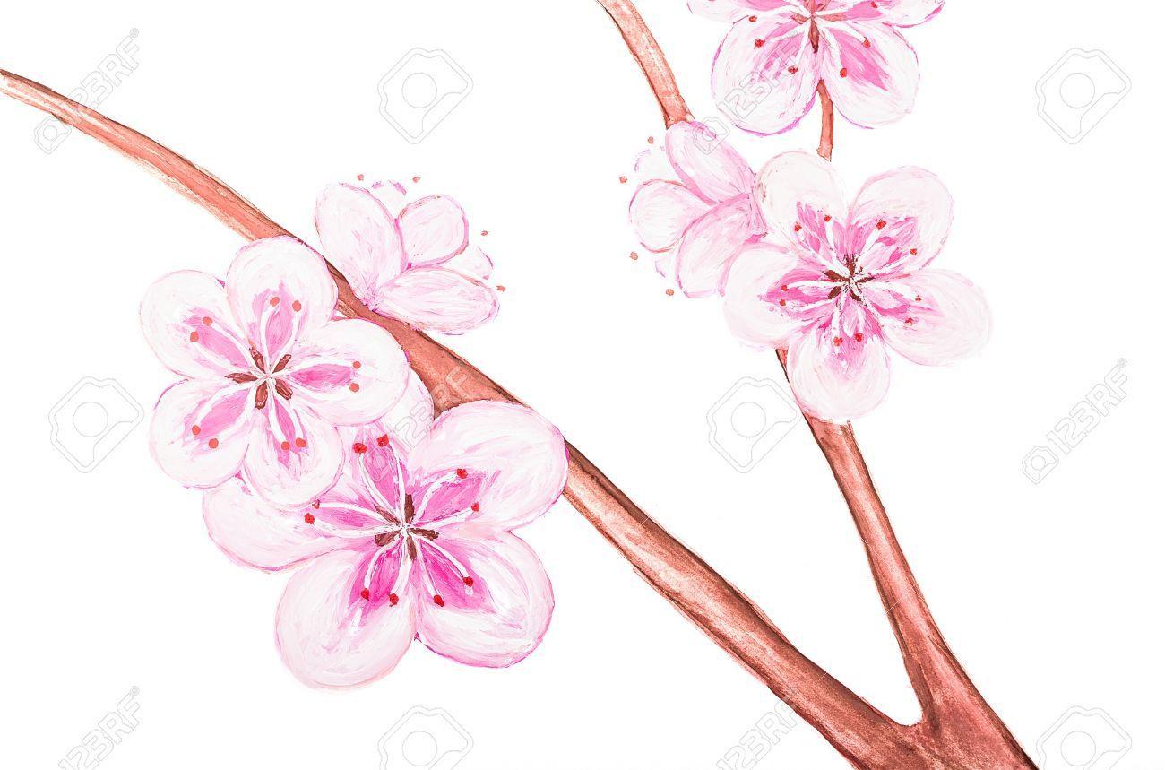 Fleur De Sakura Dessin De La Peinture Isole Sur Fond Blanc Banque