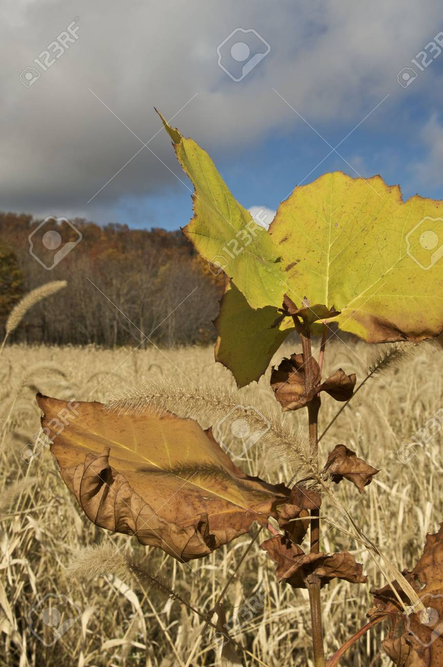 Fall Leaves and Sky Stock Photo - 5788939