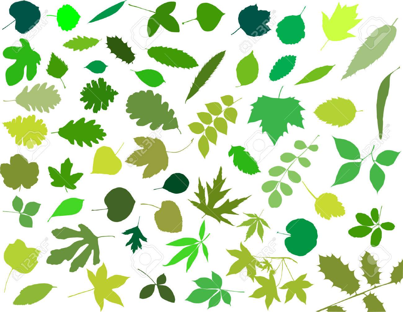 Silhouettes of leaves Stock Vector - 4392247
