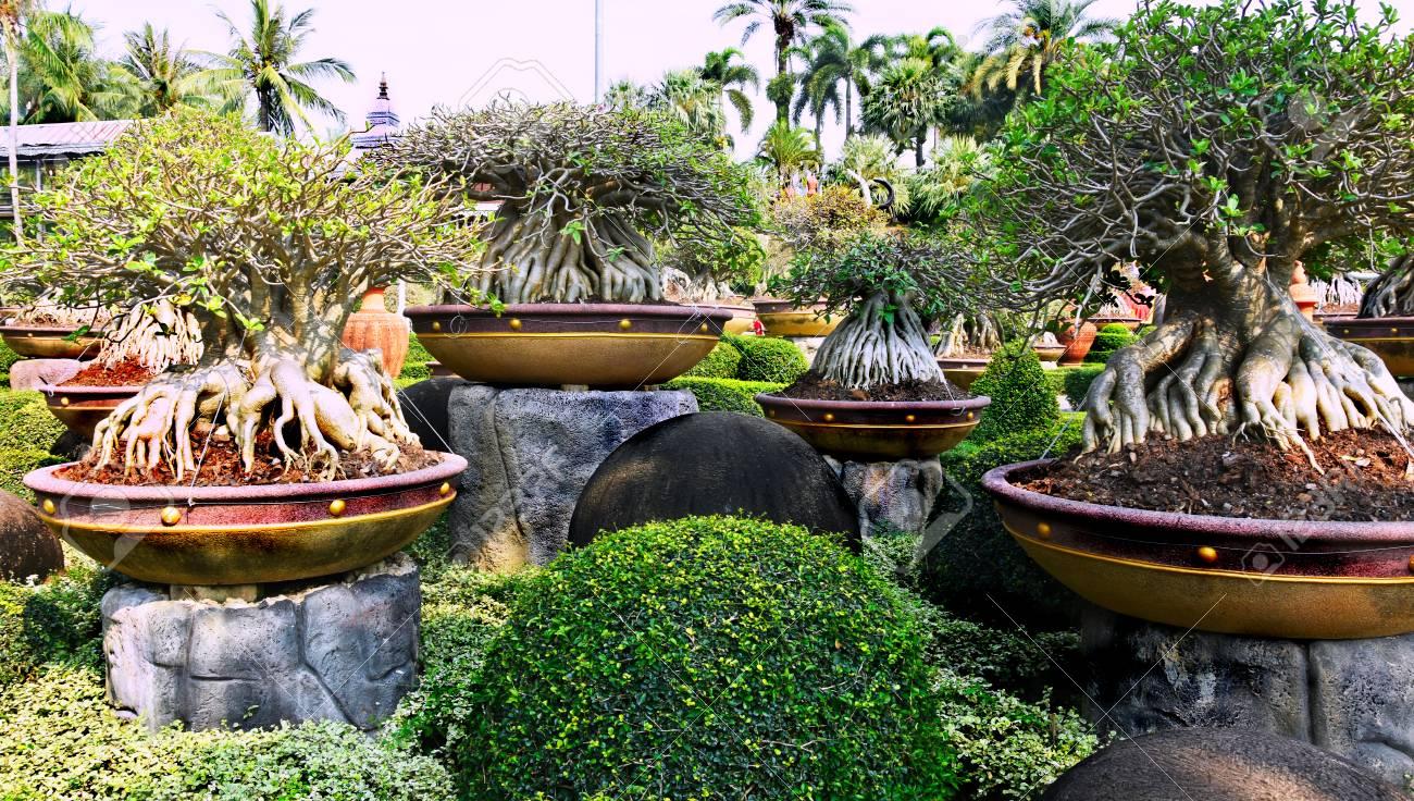 Nong Nooch Tropical Botanical Garden, Pattaya City, Thailand Stock Photo - 98138541