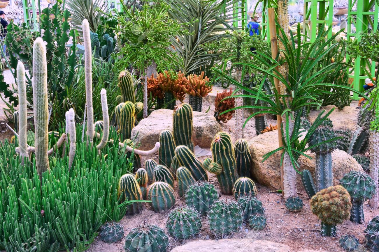 Nong Nooch Tropical Botanical Garden, Pattaya City, Thailand Stock Photo - 98131400