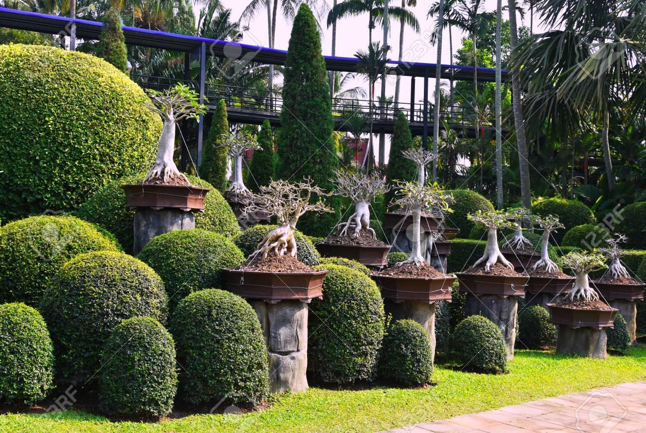 Nong Nooch Tropical Botanical Garden, Pattaya City, Thailand Stock Photo - 98414170