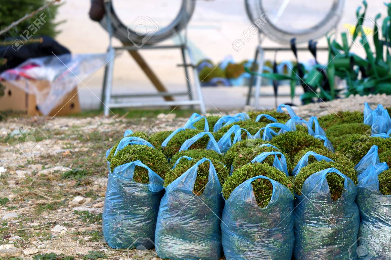 Bags With Decorative Moss For Sale On A Christmas Tree Lot Selective