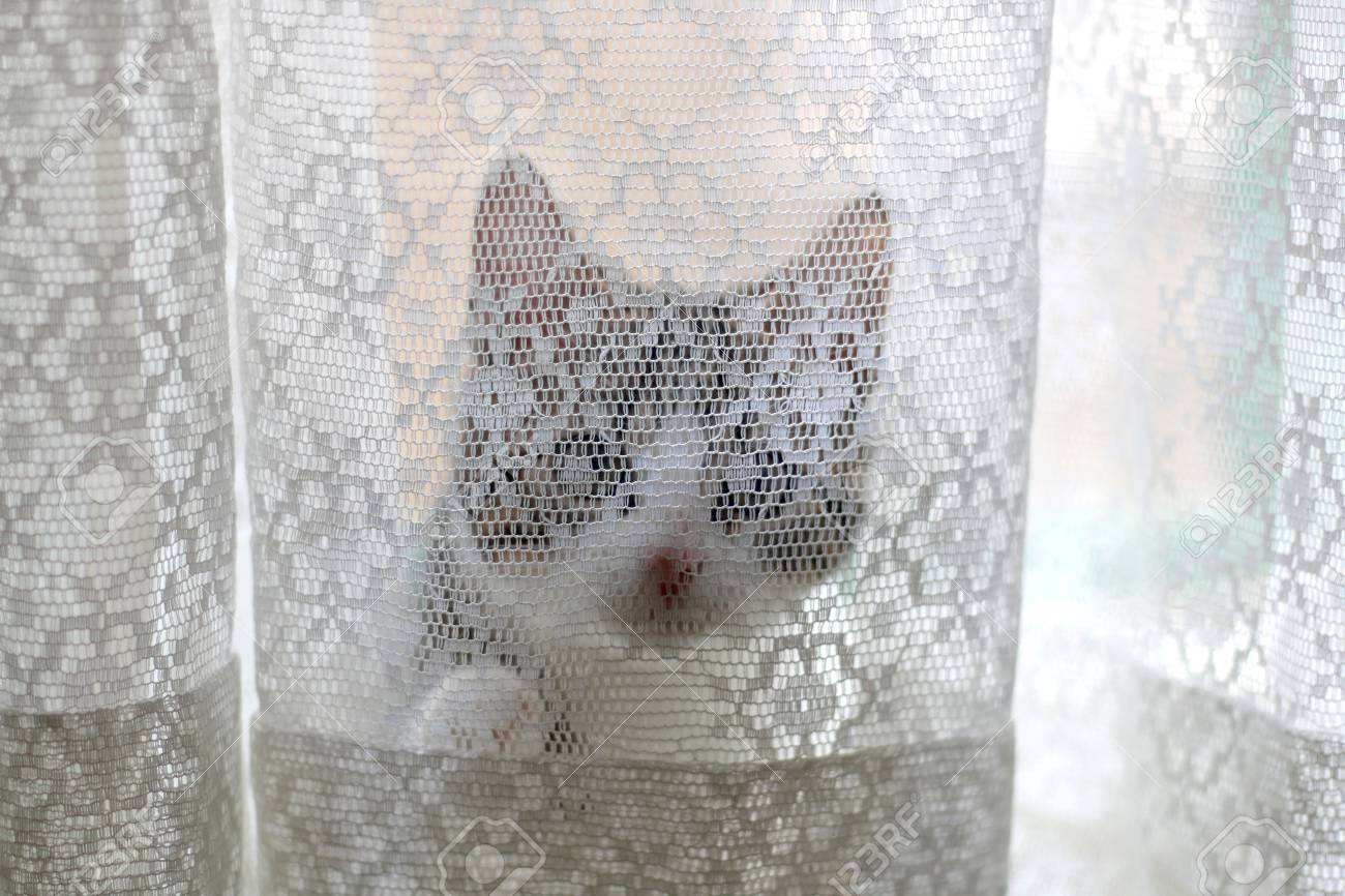 Tiny Kitten Hiding Behind White Lace Curtains Selective Focus