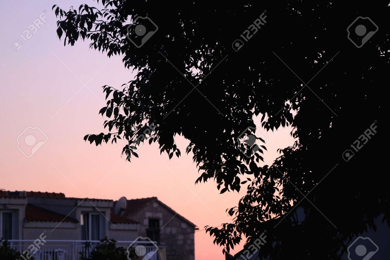 Silhouette of a tree branches in a garden and beautiful sunset sky. Selective focus. - 166122442