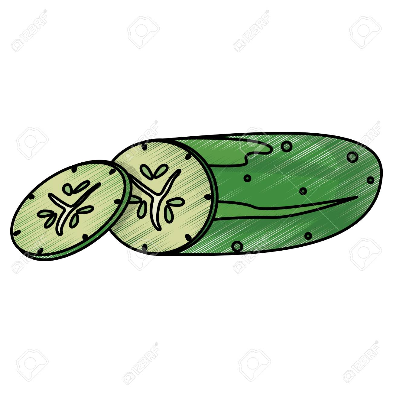 Colored Concept Of Drawing Cucumber Food Nutrition Vector ... for Drawing Cucumber  181obs