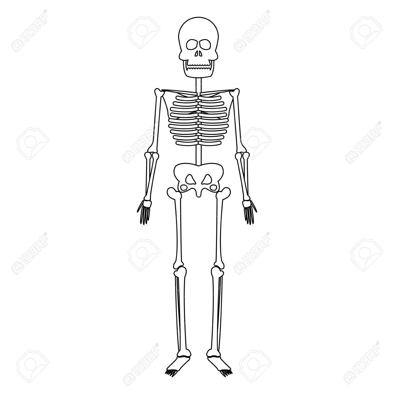 Atemberaubend Anatomie Menschliche Knochen Fotos - Anatomie Von ...