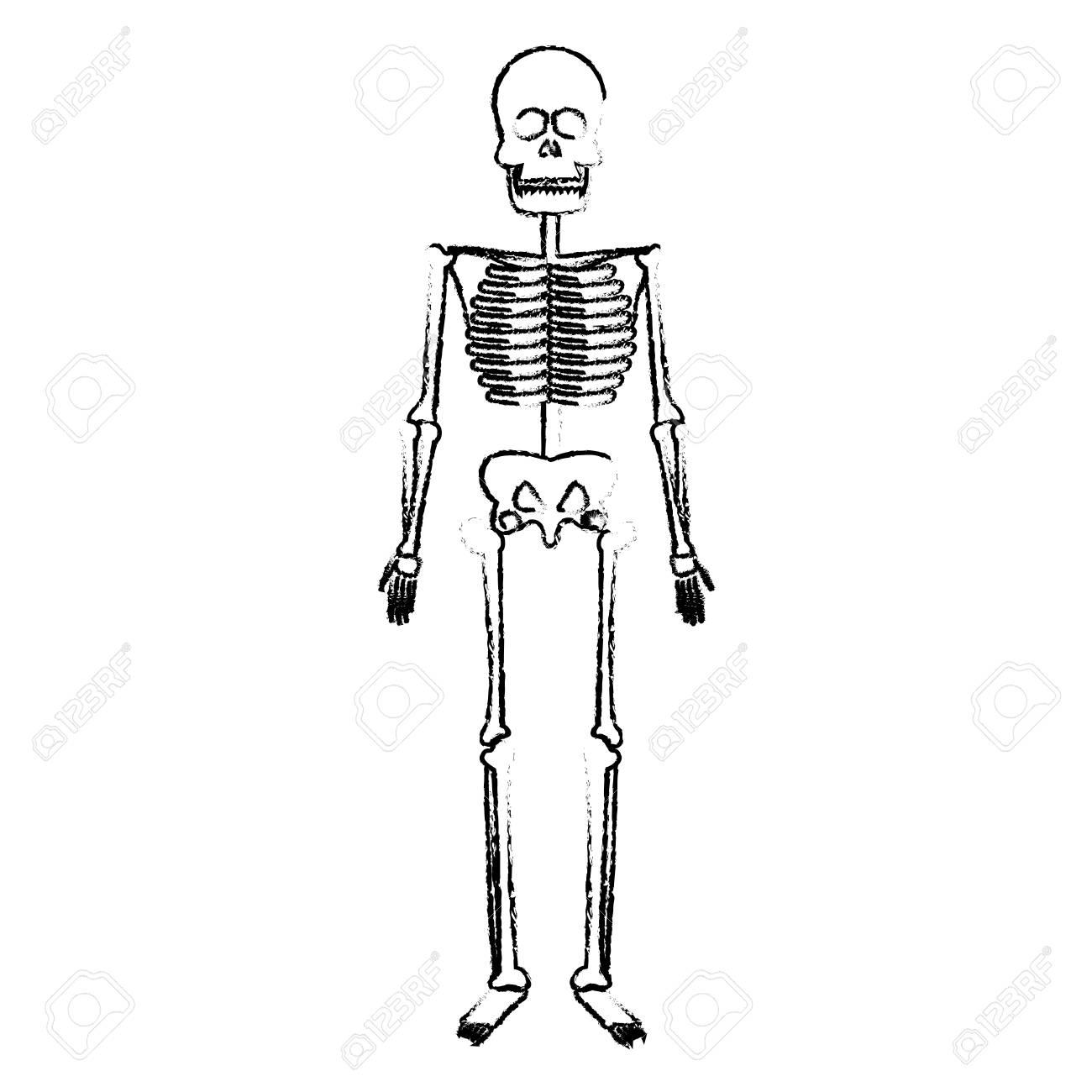 Esqueleto Humano Cuerpo Huesos Vector Médica Ilustración ...