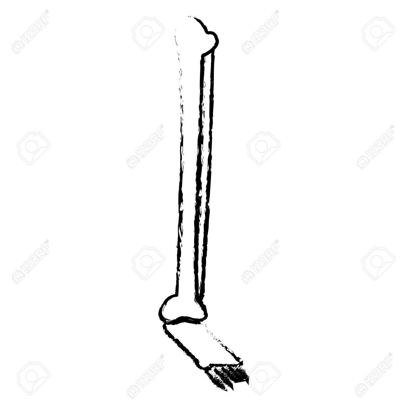 Menschliche Bein Fuß Knochen Anatomie Medizinische Skizze Vektor ...