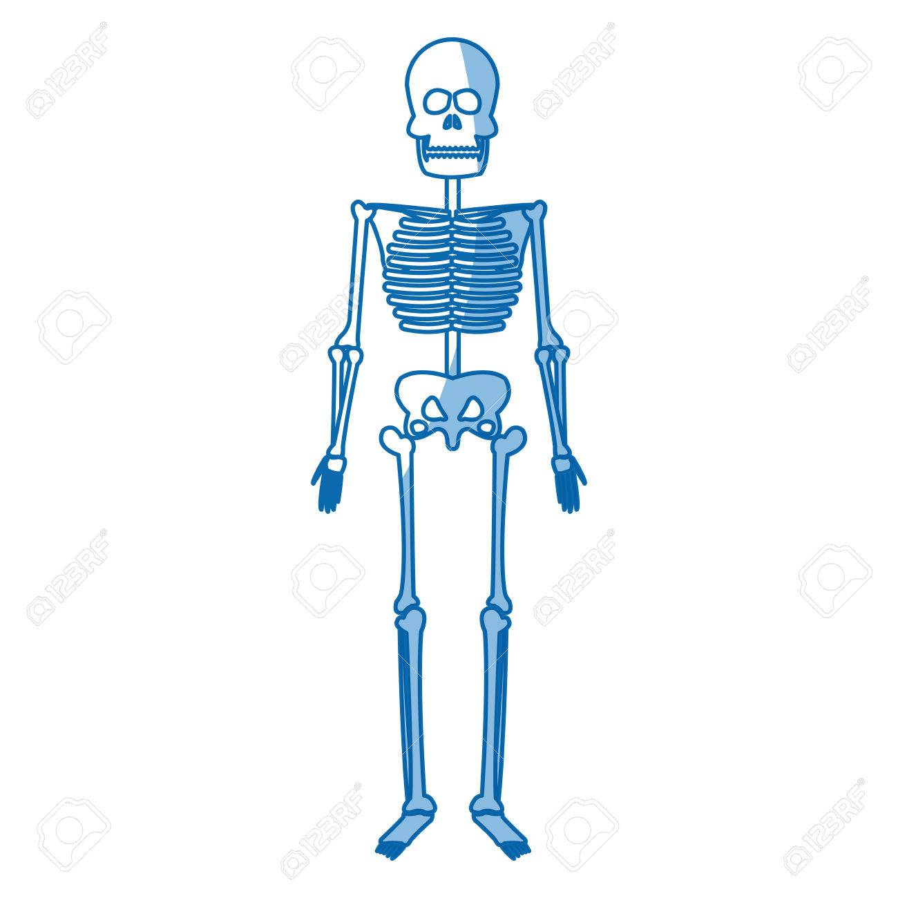 Skelett Menschlichen Körper Knochen Medizinischen Vektor ...