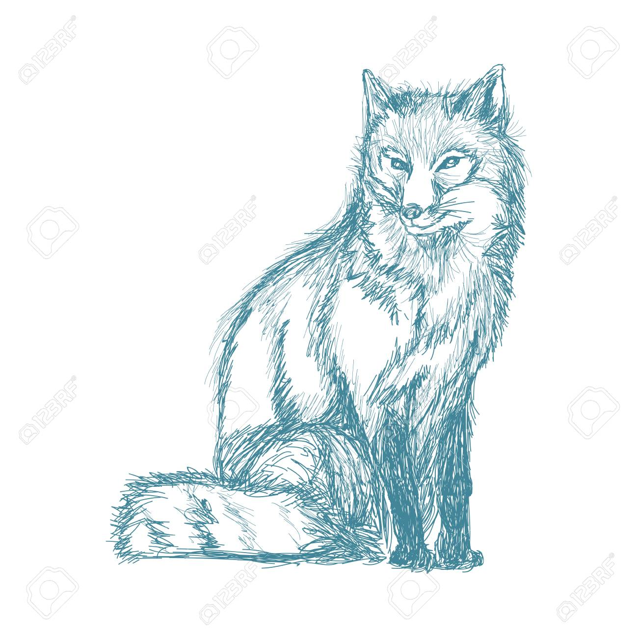 Vector wolf wildlife animal image is hand drawn pencil blue sketch of wolf vector illustration