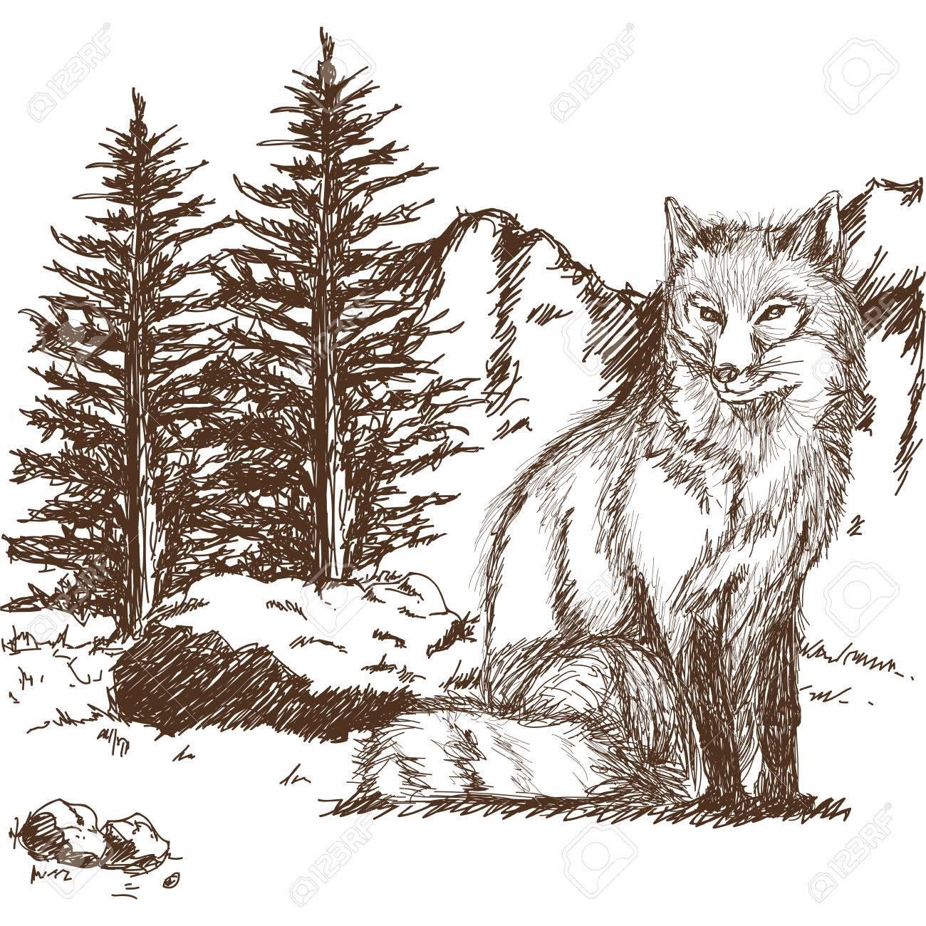 La Imagen Del Animal De La Fauna Del Lobo Es Dibujada A Mano Dibujo