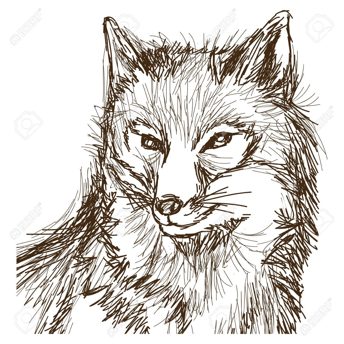 Wolf wildlife animal image is hand drawn portrait pencil sketch