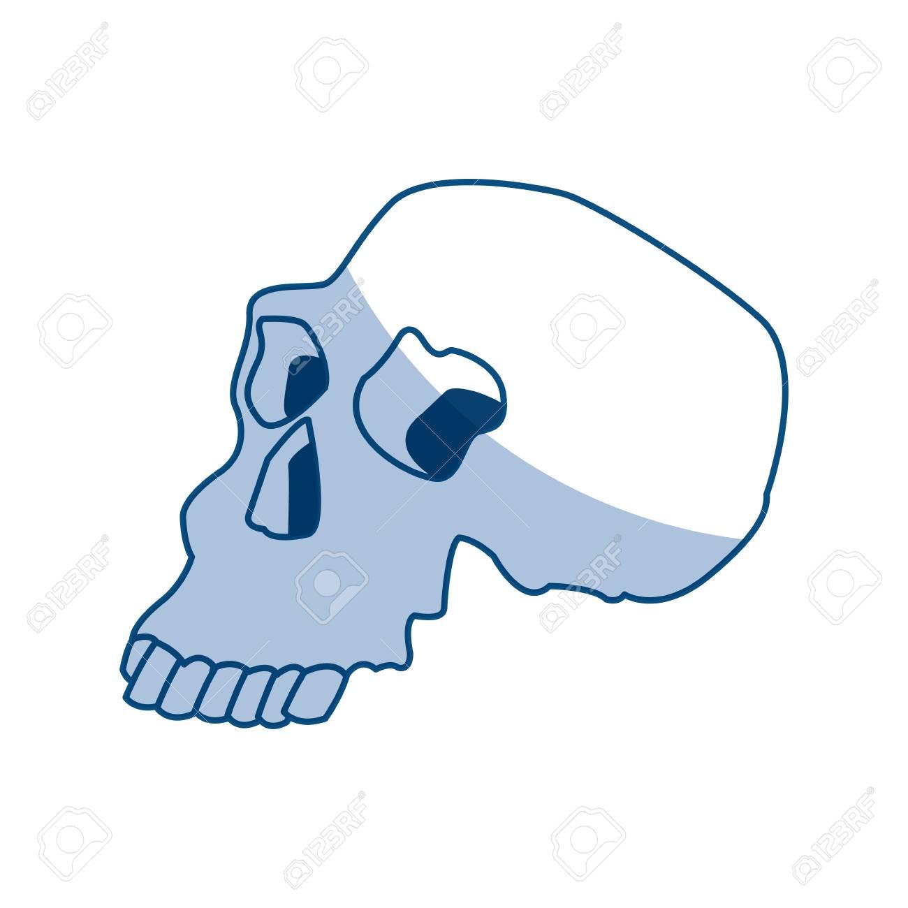 Skull Human Structure Anatomy Bone Icon Vector Illustration Royalty