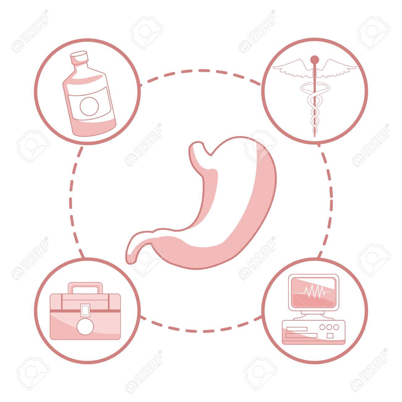 Fondo Blanco Con Secciones De Color Rojo De órgano De Estómago De ...