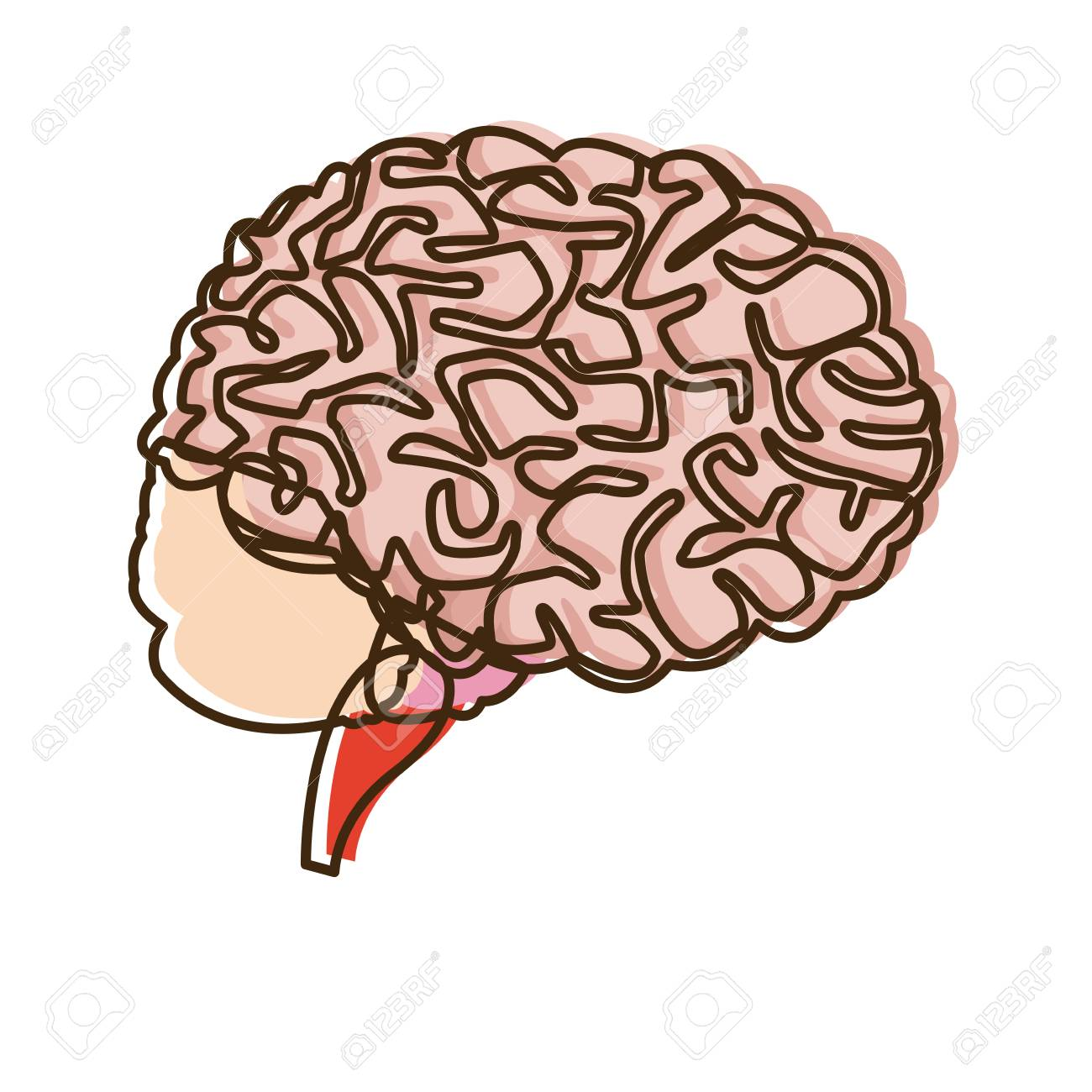 Human Brain For Medical Healthy Memory Anatomy Design Vector ...