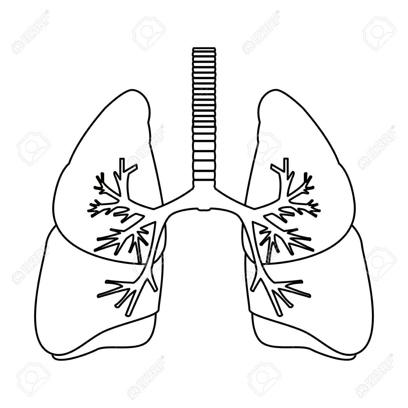 Human lungs anatomy medical science vector illustration royalty human lungs anatomy medical science vector illustration stock vector 82947115 ccuart Choice Image