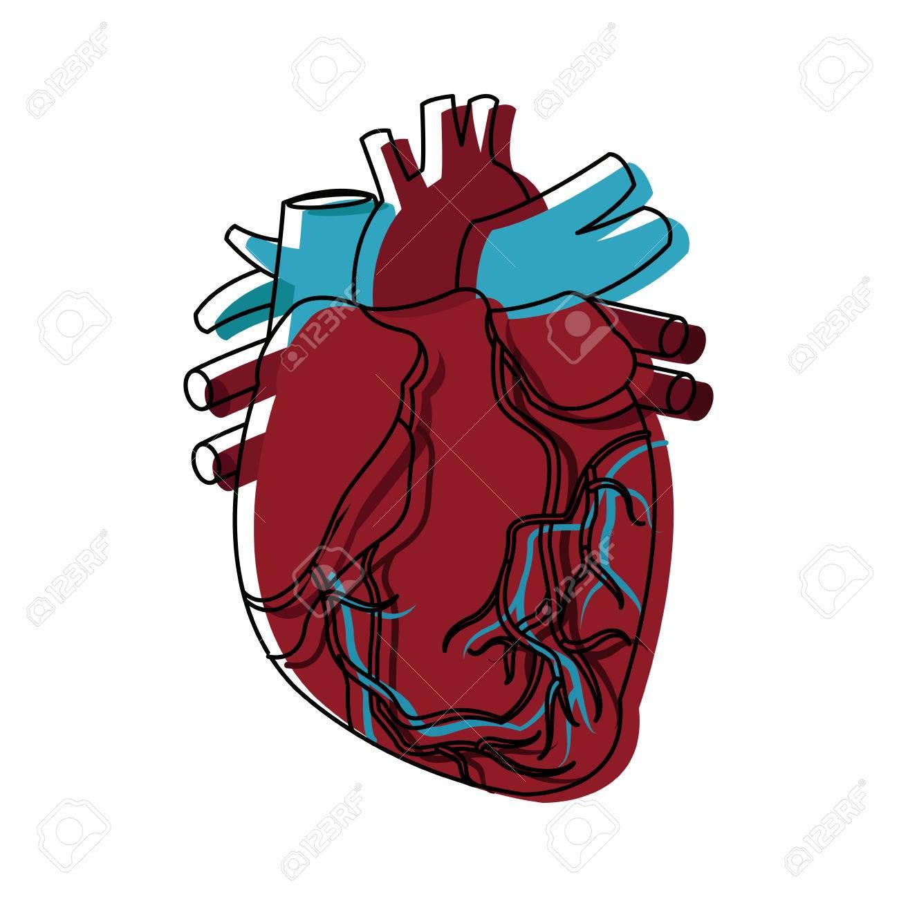 Anatomía De La Ilustración De Vector De Atención Médica De Corazón ...