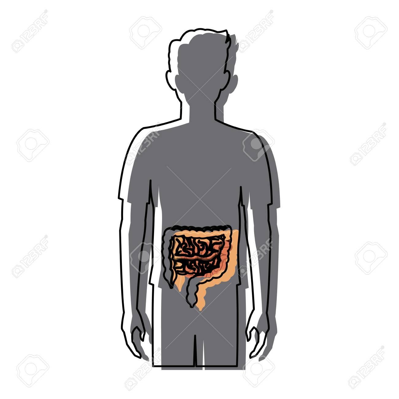Menschlicher Mann Körper Anatomie Darm Medizinisches Bild Vektor ...