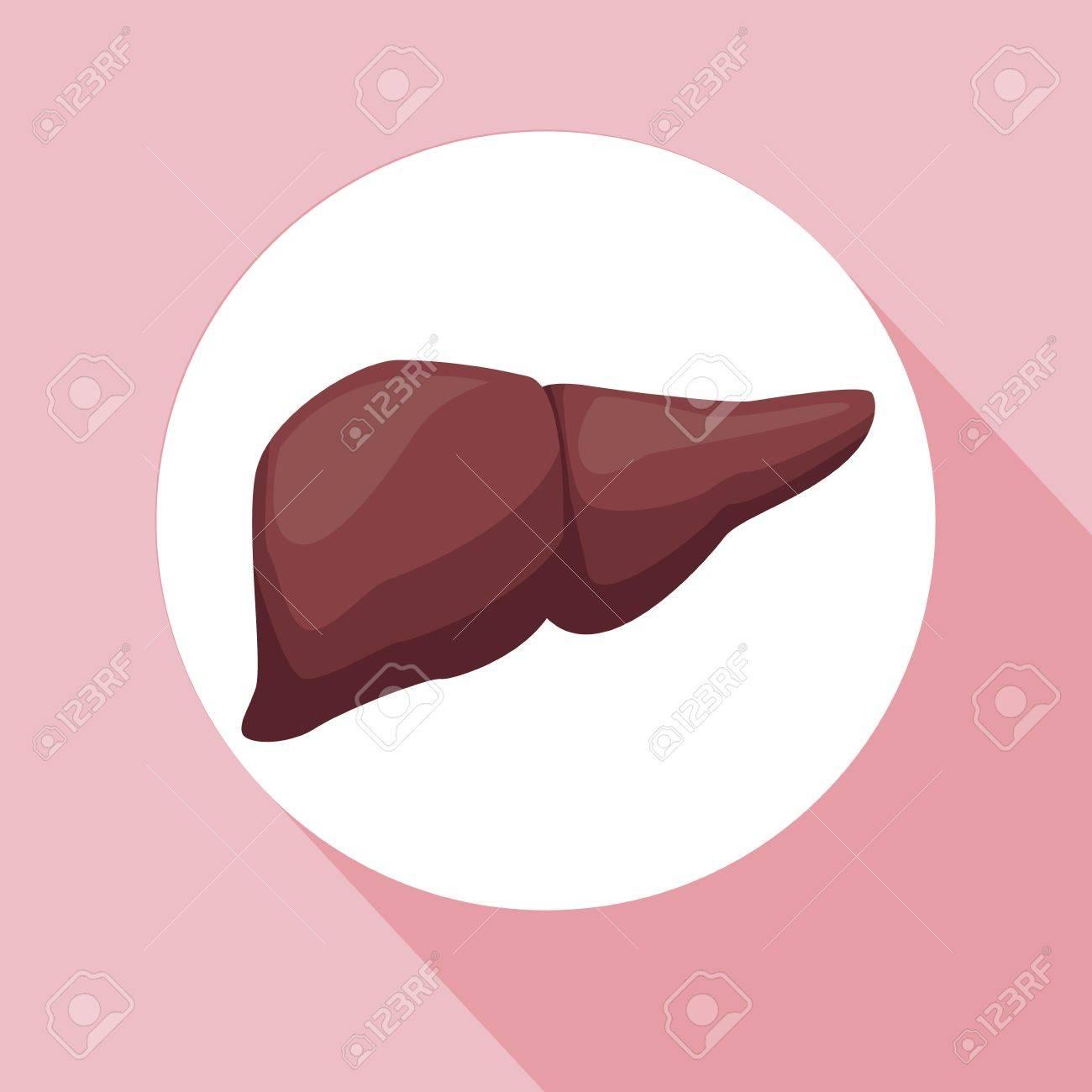 Fondo De Color Con Marco Circular órgano De Hígado Cuerpo Humano ...