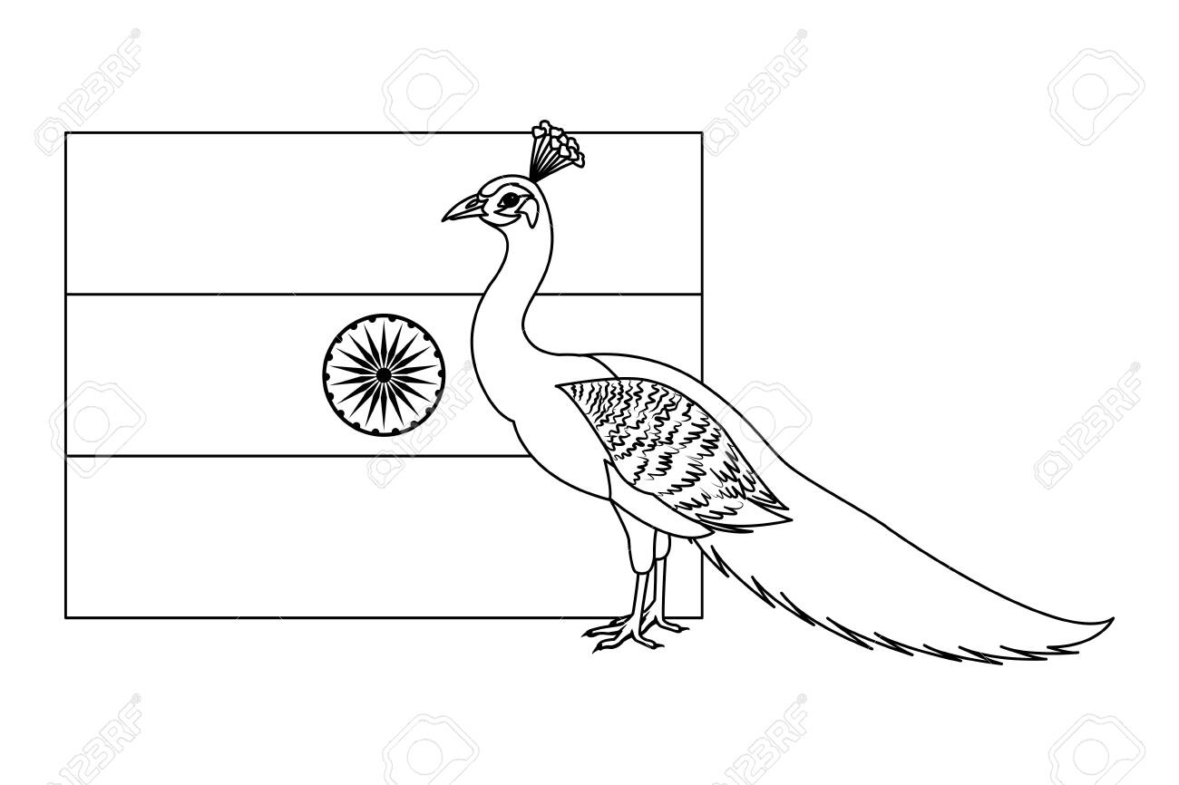 flag of india with peacock icon cartoon in black and white vector royalty free cliparts vectors and stock illustration image 129853951 123rf com