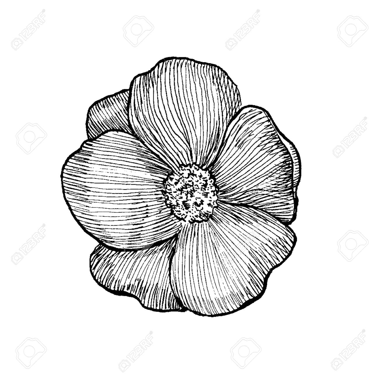 Black and white sketch of a dog rose flower ink pen hatching stock black and white sketch of a dog rose flower ink pen hatching stock photo 16710495 mightylinksfo